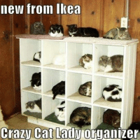 Cats, Crazy, and Ikea: new from Ikea  Crazy Cat Lady  organizer