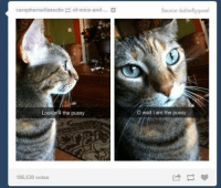 Funny, Pussy, and Tumblr: carapherneliasucks ofmice-and-...  Lookin 4 the pussy  186,630 notes  Source: butterfly queef  o wait am the pussy ‪#‎theworstoftumblr‬