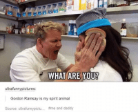 Ramsay: WHAT ARE YO  ultrafunnypictures  Gordon Ramsay is my spirit animal  Source: ultrafunnypictu  #me and daddy