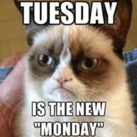 """TUESDAY  IS THE NEW  """"MONDAY Can we start the 3 day weekend again please?"""