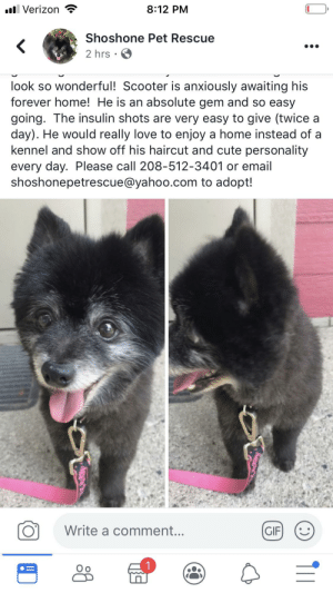 Cute, Gif, and Haircut: 8:12 PM  l Verizon  Shoshone Pet Rescue  2 hrs  look so wonderful! Scooter is anxiously awaiting his  forever home! He is an absolute gem and so easy  going. The insulin shots are very easy to give (twice a  day). He would really love to enjoy a home instead of a  kennel and show off his haircut and cute personality  every day. Please call 208-512-3401 or email  shoshonepetrescue@yahoo.com to adopt!  Write a comment...  GIF  1 OMG real life Sven
