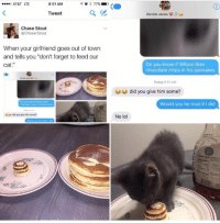 """Cat, Lte, and Madness: 8:51 AM  AT&T LTE  77%  Tweet  Chase Stout  @Chaser Stout  When your girlfriend goes out of town  and tells you """"don't forget to feed our  Cat  u u did you give him some?  Kenzie Jones  Do you know if Wilson likes  chocolate chips in his pancakes  Today 9:01 AM  did you give him some?  Would you be mad if I did  No lol"""
