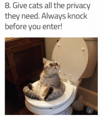 8 give cats all the privacy they need always knock before you enter