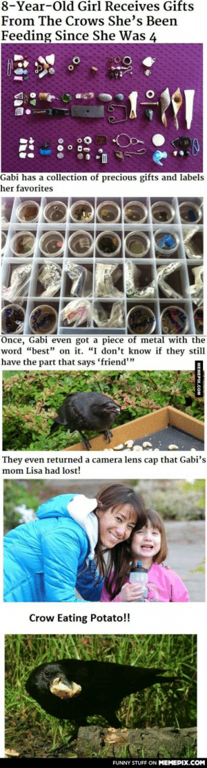 """I just read this!omg-humor.tumblr.com: 8-Year-Old Girl Receives Gifts  From The Crows She's Been  Feeding Since She Was 4  Gabi has a collection of precious gifts and labels  her favorites  Once, Gabi even got a piece of metal with the  word """"best"""" on it. """"I don't know if they still  have the part that says 'friend""""  They even returned a camera lens cap that Gabi's  mom Lisa had lost!  Crow Eating Potato!!  FUNNY STUFF ON MEMEPIX.COM  MEMEPIX.COM I just read this!omg-humor.tumblr.com"""