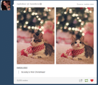 ‪#‎TheWorstOfTumblr‬: rupindeer  uxsidera  melon-mini  Scooby's first Christmas!  8,636 notes  Source: melon-mini ‪#‎TheWorstOfTumblr‬