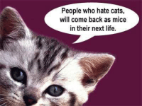 Cats, Life, and Grumpy Cat: People who hate cats,  will come back as mice  in their next life.