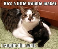 Grumpy Cat, Hes, and Trouble Maker: He's a little trouble maker.  I taught hin Well