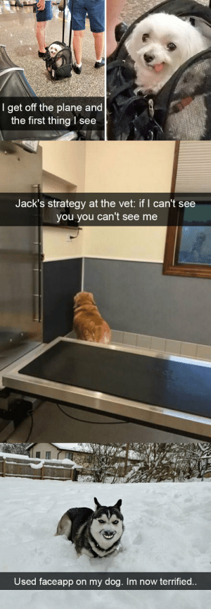 animalsnaps:Dog snaps: 84  I get off the plane and  the first thing l see   Jack's strategy at the vet: if I can't see  you you can't see me   Used faceapp on my dog. Im now terrified.. animalsnaps:Dog snaps
