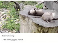 This is adorable awh: thebestoftumbling:  otter skilfully juggling his rock This is adorable awh