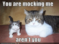 Mocking Me: You are mocking me  aren't you  ICANHASCH  EEZEURGER, co M