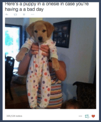 Bad, Bad Day, and Funny: ere's a puppy in a onesie in case you're  having a a bad day  309,124 notes ‪#‎TheWorstOfTumblr‬