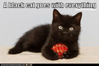 Cats, Grumpy Cat, and Cat: ADlack Cat goes with everything