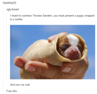 Free Him: that sthat24  bread  I heard to summon Thomas Sanders, you must present a puppy wrapped  in a tortilla  And now we wait  Free him.