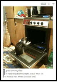 Definitely, Cold, and Satan: 87.949  | He's summoning Satan  or maybe he's just warming his paws because theyre cold  No, he's a cat. He is definitely summoning Satan <p>Satan's Furry Worshiper.</p>