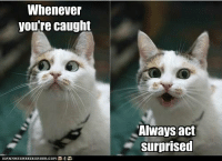 Surprised Meme: Whenever  you're caught  Always act  surprised
