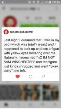 """Lol -munia: 88% 00:16  samoose.and squirrel  Last night I dreamed that I was in my  bed (which was totally weird) and l  happened to look up and see a figure  with yellow eyes hovering over me.  Naturally, I screamed """"no lM NOT  SAM WINCHESTER"""" and the figure  just kinda shrugged and went """"okay,  sorry"""" and left.  a Lol -munia"""