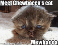 funny cats: Meet Chewbacca's Cat  cataddictsanony-mouse  Mewbacca