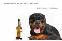 Real Alcoholic Memes: sometimes i'm not sure what i hate more:  everyone or everything... Real Alcoholic Memes