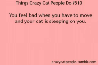 Bad, Cats, and Crazy: Things Crazy Cat People Do #510  You feel bad when you have to move  and your cat is sleeping on you  crazycat people tumblr com