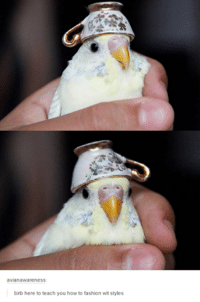birb: avian awareness  birb here to teach you how to fashion wit styles