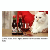 ⠀: Never Drink Alone Again Because Now There's Wine for  Cats ⠀