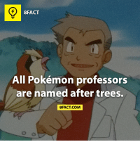Pokemon Professors: 8FACT  All Pokémon professors  are named after trees.  8FACT COM