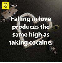 Dank, Love, and Cocaine: 8FACT  Falling in love  produces the  same high as  taking cocaine. Love is a drug. (via 8fact)