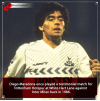 Arsenal, England, and Football: 8Fact Football  Diego Maradona once played a testimonial match for  Tottenham Hotspur at White Hart Lane against  Inter Milan back in 1986. One of the greats 🙌 Do Tottenham have any world class players 🤔👀⚽️🤷🏾‍♂️ • • harrykane england spain manchestercity premierleague football footballseason arsenal tottenhamhotspur london