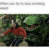 Whyyy 😩😩😂😂😂: When you try to stop smoking Weed Whyyy 😩😩😂😂😂