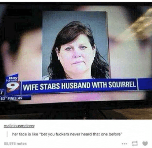"News, Breaking News, and Squirrel: ,9 1 WIFE STABS HUSBAND WITH SQUIRREL  63 PINELLAS  maliciousmelons:  her face is like ""bet you fuckers never heard that one before""  88,978 notes This breaking news story."