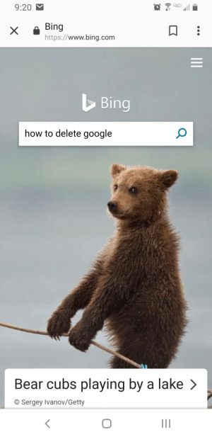 920 X Bing Httpswwwbingcom Bing How To Delete Google Bear