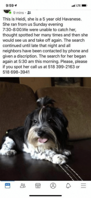 Lost dog Burnt Hills.....14 Kevin Drive  Please spread the word.  Her name is Heidi.  518 399 2163 518 698 3941: 9:59  LTE  9 mins  This is Heidi, she is a 5 year old Havanese  She ran from us Sunday evening  7:30-8:00 We were unable to catch her,  thought spotted her many times and then she  would see us and take off again. The search  continued until late that night and all  neighbors have been contacted by phone and  given a discription. The search for her began  again at 5:30 am this morning. Please, please  if you spot her call us at 518 399-2163 or  518 698-3941 Lost dog Burnt Hills.....14 Kevin Drive  Please spread the word.  Her name is Heidi.  518 399 2163 518 698 3941