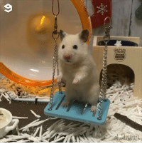 9gag, Memes, and Hamster: 9  Chamtan Error: hamster.exe has stopped working By @hamland1026 - hamster hasstoppedworking 9gag