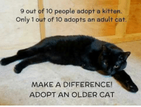 Memes, Kittens, and 🤖: 9 out of o people adopt a kitten.  Only 1 out of 10 adopts an adult cat.  MAKE A DIFFERENCE!  ADOPT AN OLDER CAT