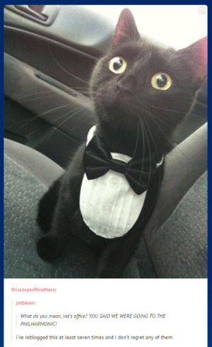 Curse your sudden and uncultured betrayal: 9)  thiscorpsofbrothers:  jasbeaw:  What do you mean, vet's office? YOU SAID WE WERE GOING TO THE  PHILHARMONIC!  i've reblogged this at least seven times and i don't regret any of them Curse your sudden and uncultured betrayal