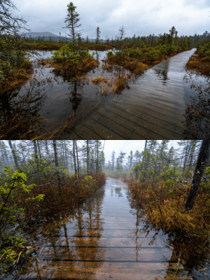 90377:   Bog Trail by Shane Garlock  : 90377:   Bog Trail by Shane Garlock