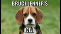 Bruce Jenner, Cats, and Conservative: BRUCE JENNER S  CAT