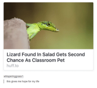 Funny, Life, and Tumblr: Lizard Found In Salad Gets Second  Chance As Classroom Pet  huff to  whisperinggrass1  this gives me hope for my life