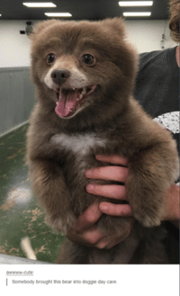awwww-cute  I  Somebody brought this bear into doggie day care.