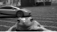90s music video be like. 🎤Follow @9gag App📲👉@9gagmobile 👈 - - - 📹 YAHBOYFROGEY | Twitter 9gag frog instafrog musicvideo toad reptile: 90s music video be like. 🎤Follow @9gag App📲👉@9gagmobile 👈 - - - 📹 YAHBOYFROGEY | Twitter 9gag frog instafrog musicvideo toad reptile