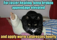 Grumpy Cat, Applies, and Appendage: For faster healing, keep  broken  appendage elevated  and apply warm catpresseshourly