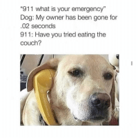 "Memes, Couch, and What Is: ""911 what is your emergency""  Dog: My owner has been gone for  02 seconds  911: Have you tried eating the  couch? Too accurate 😂"