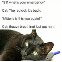 """Dank Memes, Cat, and Red: """"911 what's your emergency""""  Cat: The red dot. It's back.  """"Mittens is this you again?""""  Cat: (heavy breathing) just get here Tag someone who owns owns a cat bc tbh cats are cool"""