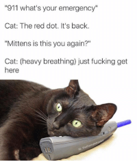 """Cats, Memes, and 🤖: """"911 what's your emergency""""  Cat: The red dot. It's back.  """"Mittens is this you again?""""  Cat: (heavy breathing) just fucking get  here  TheFunn"""