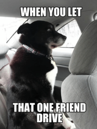 Those moments of sheer terror... Car Throttle: WHEN YOU LET  THAT ONE FRIEND  DRIVE Those moments of sheer terror... Car Throttle