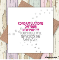 Send our 'Congratulations on Your New Puppy – Your House will Never be the Same Again' greetings card to a friend or family member who has recently brought a new dog into their life Available to buy from https://www.etsy.com/uk/listing/524748052/congratulations-on-your-new-puppy-your?ref=shop_home_active_2: 92  CONGRATULATIONS  ON YOUR  So o NEW PUPPY!  YOUR HOUSE WILL  NEVER LOOKTHE  SAME AGAIN!  藷  汾  shakepaws.com Send our 'Congratulations on Your New Puppy – Your House will Never be the Same Again' greetings card to a friend or family member who has recently brought a new dog into their life Available to buy from https://www.etsy.com/uk/listing/524748052/congratulations-on-your-new-puppy-your?ref=shop_home_active_2
