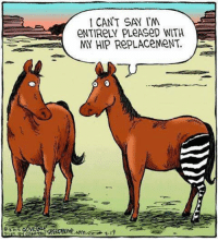 thumb_92013 i cant say im entirely pleased with my hip 14613048 25 best hip replacement memes hip hip memes, hip memes, cant memes