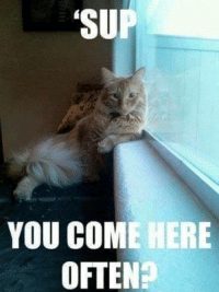 Grumpy Cat, Comely, and  Come Here: SUP  YOU COME HERE  OFTEN