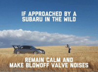 Stutututu Car memes: IF APPROACHED BY A  SUBARU IN THE WILD  REMAIN CALM AND  MAKE BLOWOFF VALVE NOISES Stutututu Car memes