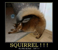 My Bad Meme: SQUIRREL  No. Wait, My Bad  CAT I